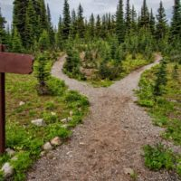 photo-of-pathway-surrounded-by-fir-trees-1578750-1